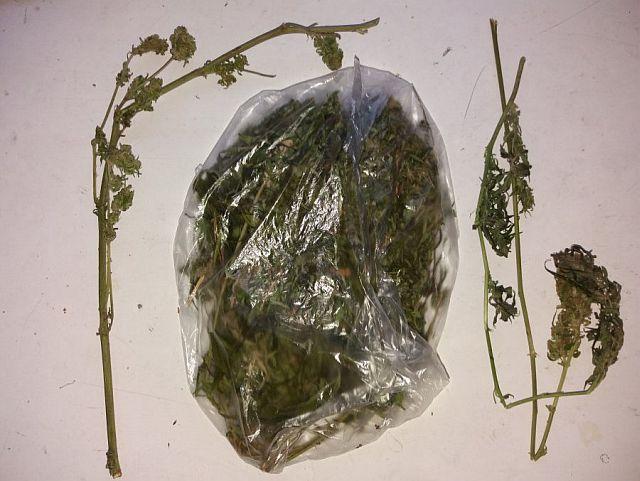 Policjanci zabezpieczyli marihuanę u mieszkańca Jasła