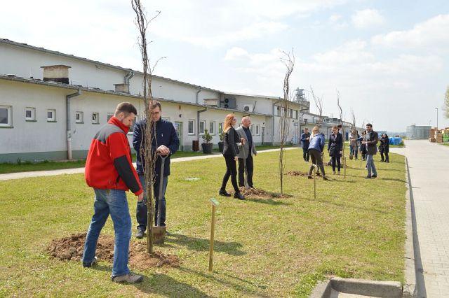 18 drzew na 18 lecie Baltic Wood