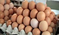 Rzecznik GIS wyjaśnia, że zaniepokojenie budzi fakt, iż skażenie fipronilem wykryto już w listopadzie 2016 roku. Dlaczego tak długo zwlekano z ujawnieniem zagrożenia zatrucia się skażonymi jajami? Fot. Archiwum